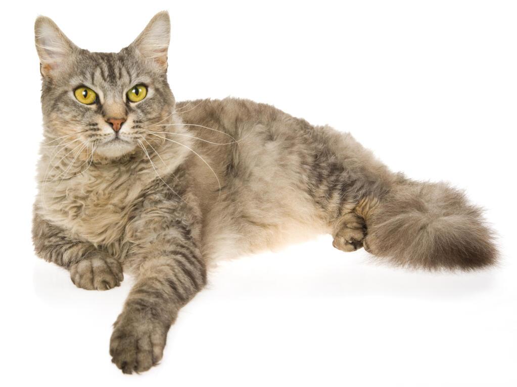 chatte sans poils Galerie allie Haze lesbienne sexe