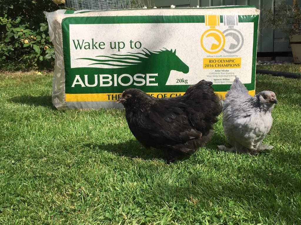 Litière Aubiose 20kg Litière Pour Poules élevage Des Poules