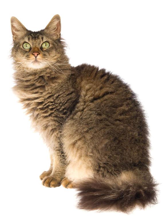 vidéo chatte sans poils monstre coq films