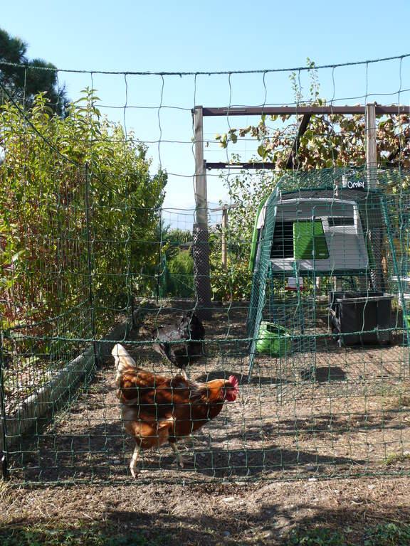 Piquets à Visser Omlet 12 Pièces Accessoires Pour Eglu élevage