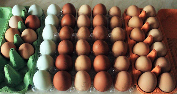 10 days worth of eggs from our 9 rescued ex batts and free range hens