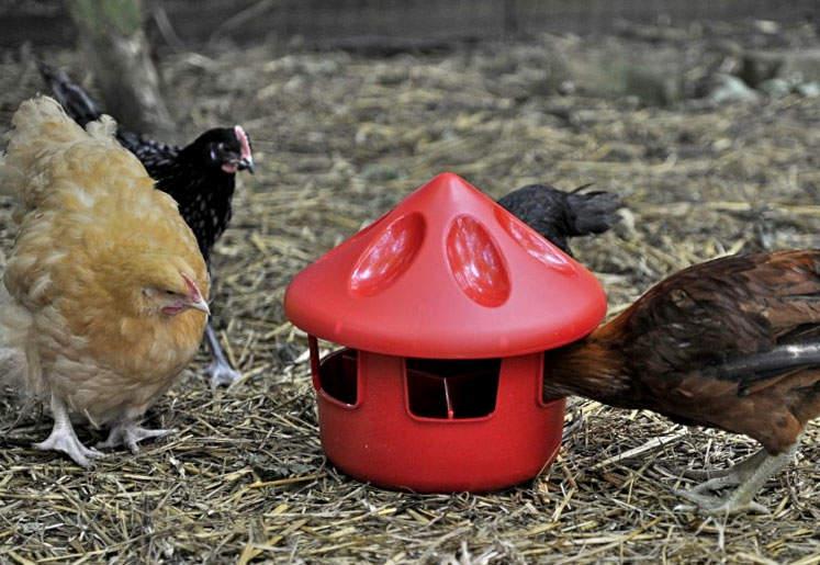 mangeoire pour poules sp cial gravier mangeoires et abreuvoirs levage des poules omlet. Black Bedroom Furniture Sets. Home Design Ideas
