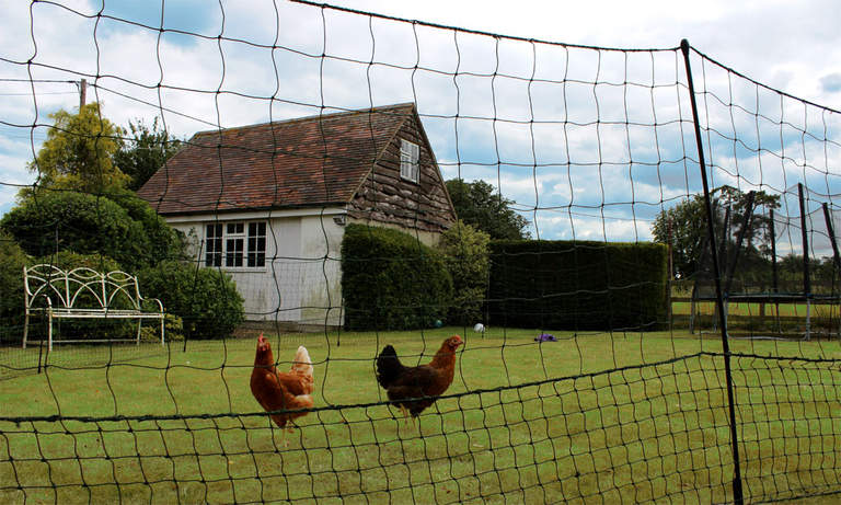 Keep chickens within or out of an area of the garden with this poultry netting