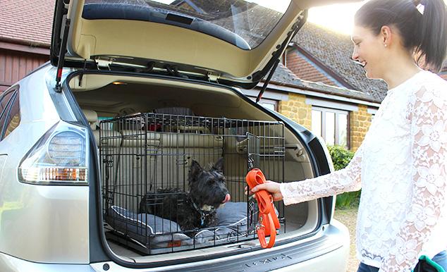 niche d int rieur pour chiens omlet fido studio chiens. Black Bedroom Furniture Sets. Home Design Ideas