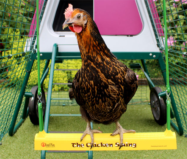 A Miss Pepperpot chicken on The Chicken Swing
