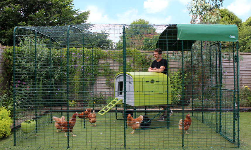 man standing inside the omlet walk in chicken run with the eglu cube chicken house. Black Bedroom Furniture Sets. Home Design Ideas