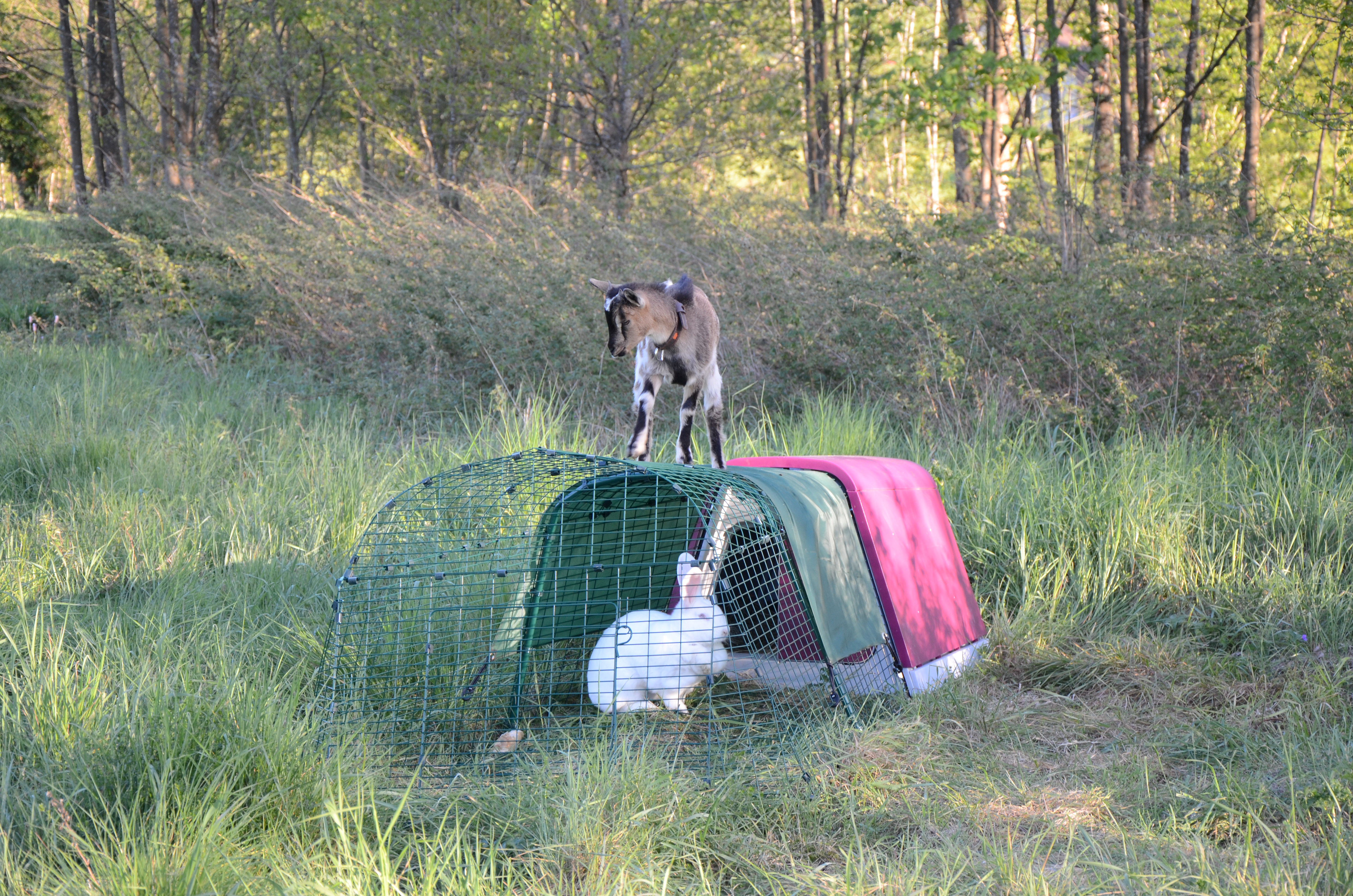 Clapier d 39 ext rieur pour lapins eglu go lapins omlet for Clapier lapin exterieur