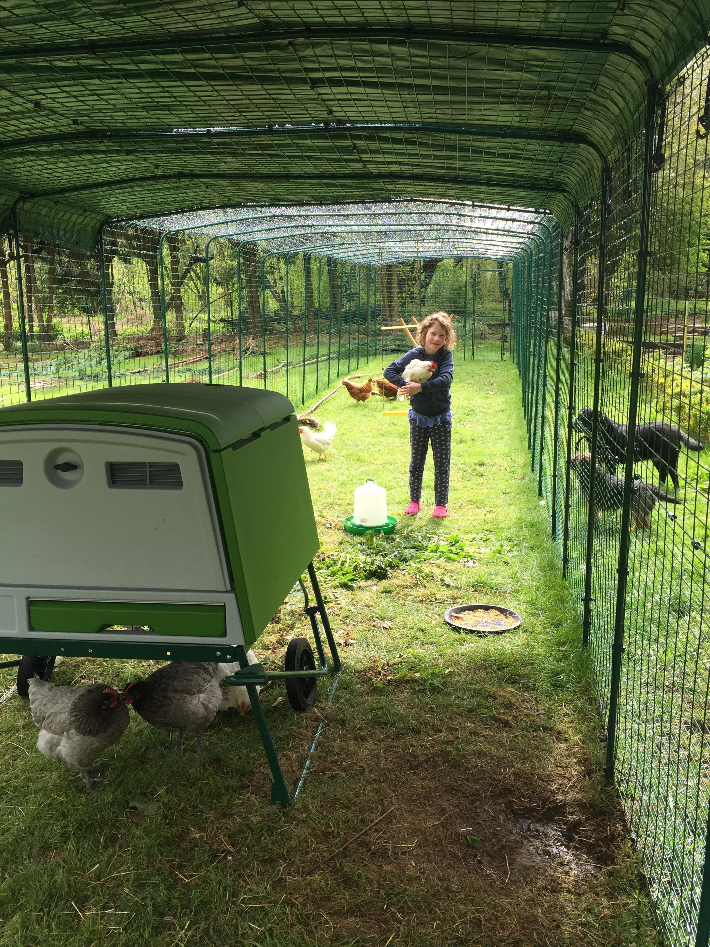 Grand enclos pour poules levage des poules omlet - Enclos a poule ...