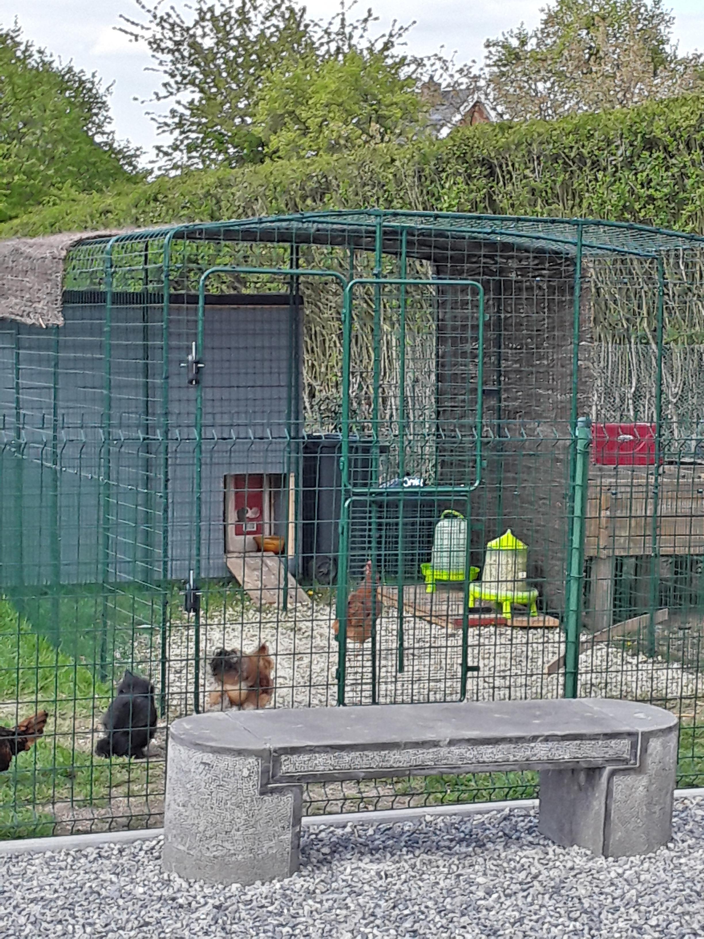 Grand enclos pour poules elevage des poules omlet - Grand coussin exterieur pas cher ...