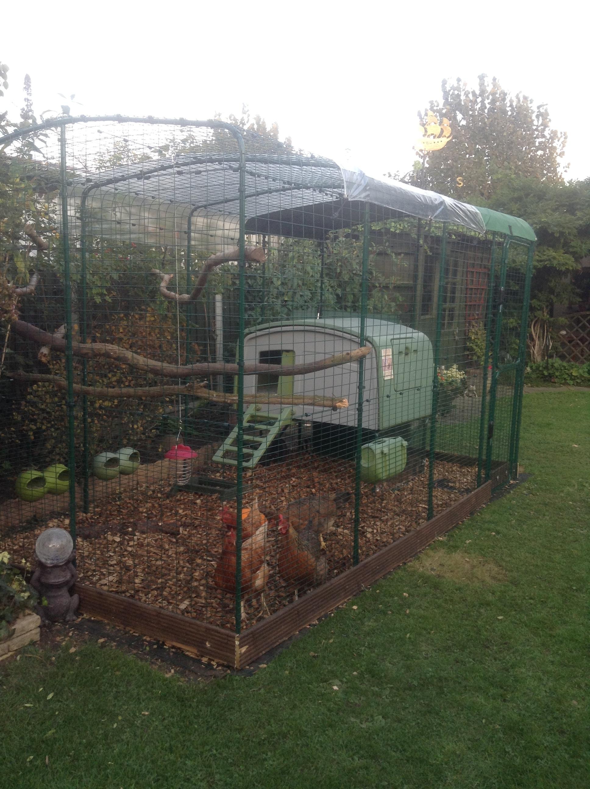 grand enclos pour poules elevage des poules omlet. Black Bedroom Furniture Sets. Home Design Ideas